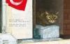 190912neko1