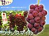 161018shinanosumairu